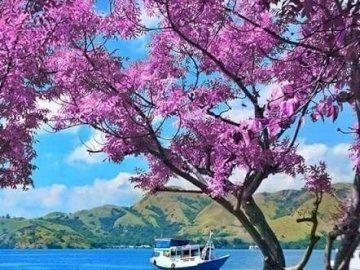 Beauty of the world. - Jigsaw puzzle. Beauty of the world. A tree next to a body of water.