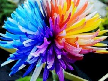 Blume... - Blume ....................... Geschlossene Blume.