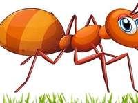 Една малка мравка в полето