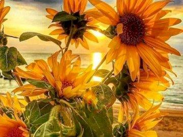 kwiaty słoneczne - pole kwiatów słonecznych. Wazon wypełniony żółtym i pomarańczowym kwiatem.