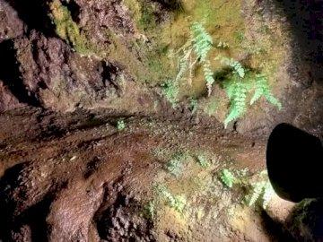 piante nella grotta - Piante In Una Grotta Su Madeira. Una stretta di una roccia.