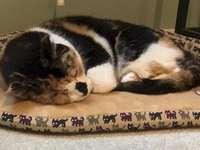 Bailey Cat