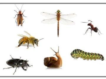 puzzle insecte - Complétez le puzzle. Quels insectes voyez-vous?. Un insecte sur fond blanc.