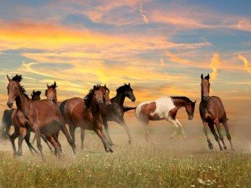 galoppierende Pferde - wundervolle galoppierende Pferde. Eine Herde von Pferden, die oben auf einem grasbedeckten Feld steh