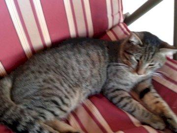 Mascotas de Victoria 2 - Este es uno de los gatitos de Victoria. Un gato durmiendo sobre una manta roja.