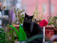 The black cat sits at home - Black cat on green plastic watering can. Lisbon, Portugal. A cat sitting on top of a green plant.