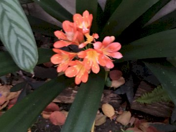 Julias Garten - Dies sind Fotos von Julia Tarifa aus dem Himmelsraum. Eine Nahaufnahme einer Blume.