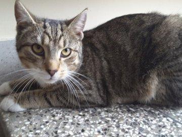 Le frère de Kitty - Le chaton est allongé dans l'escalier sous le radiateur. Donnez votre avis à tous mes puzz