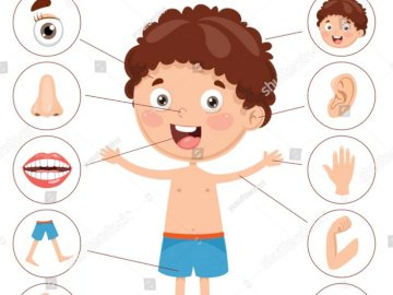 Body parts - Let's learn body part.