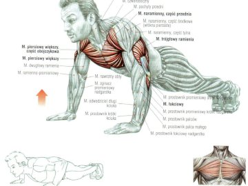 push-ups will bend - bending of the arms in the support. Arm bends in the front support.