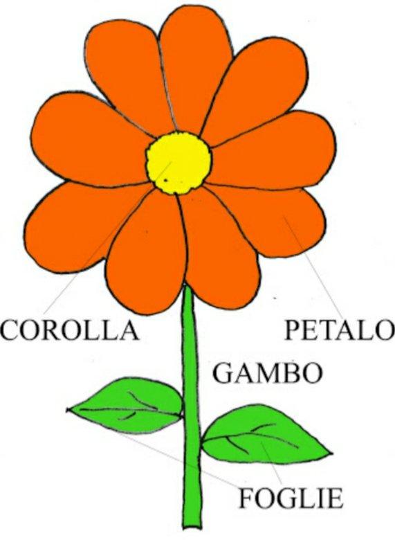 Las Partes De La Flor Juegos Gratis Online En Puzzle Factory