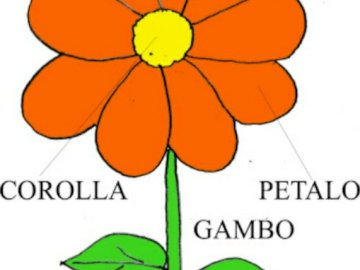 The parts of the flower - Complete the parts of the flower.