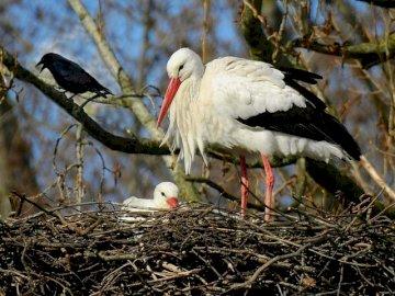 Storch im Nest - Puzzle zeigen Störche im Nest. Ein Vogel, der oben auf trockenem Gras sitzt.