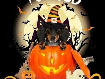 Halloween Dackel - Dackel feiert Halloween.
