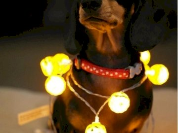 Illuminated dachshund - Illuminated dachshund for Christmas. A dog sitting on a table.