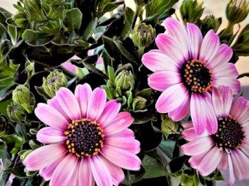Rosa Topfblume - Topfblume ideal für zu Hause. Eine Vase voller lila Blumen.