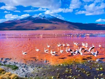 Red Lake, Flamingos - Red Lake, Flamingos, Bolivia. A flock of seagulls flying over a body of water.