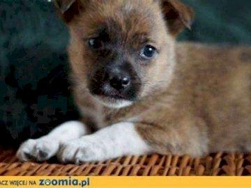 Hundeschwammkuchen - Es ist ein Biskuitkuchen, der zerbröckelt ist. Hilf ihm und gestalte ihn!. Eine Nahaufnahme eines H