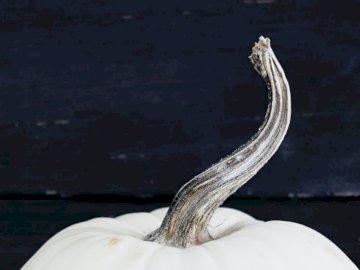 Weißer Kürbis mit langem Stiel - Weißer Kürbis. Florida. Eine Nahaufnahme eines Tieres.