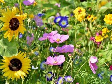 Prato primavera - Disporre i puzzle. Ti auguro tanto divertimento!. Una stretta di un fiore.