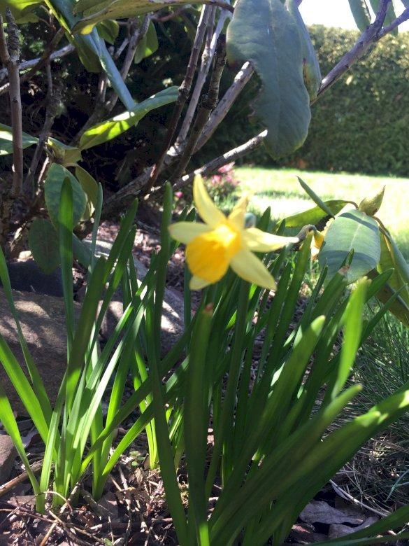 Wiosenne kwiaty - Wiosenne kwiaty z mojego ogródka. Zakończenie zielona roślina up (7×7)