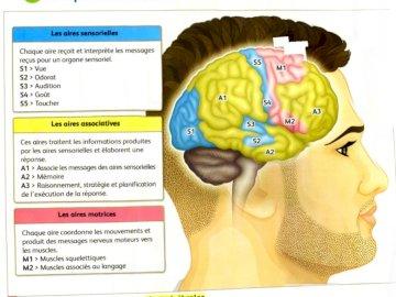 obszary mózgowe - odkrycie obszarów naszego mózgu. Zrzut ekranu telefonu komórkowego.