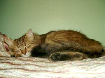 winnifred - chaton heureux une après midi d'été. Un chat allongé sur un lit.