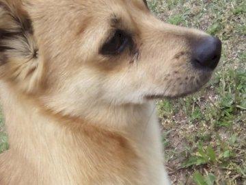 Ten pies to mistrz - Trzykrotnie wygrał w gryzieniu kapci. Brązowo-biały pies patrząc na kamery.