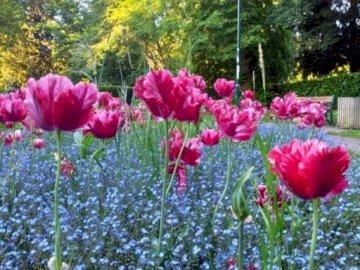 in un parco inglese - in un parco inglese, fiori, alberi, primavera, ovest,. Un vaso pieno di fiori rosa.