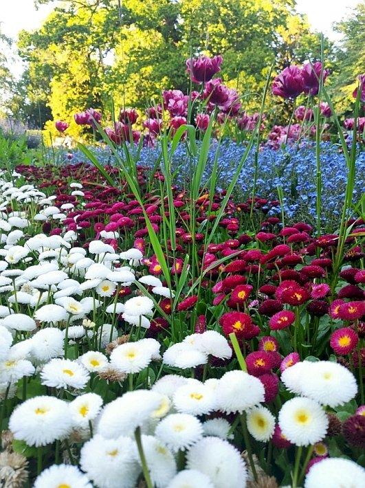 Пролет в цялата си слава - Пролет в цялата си слава, английски парк. Ваза, пълна с лилави цветя (9×8)