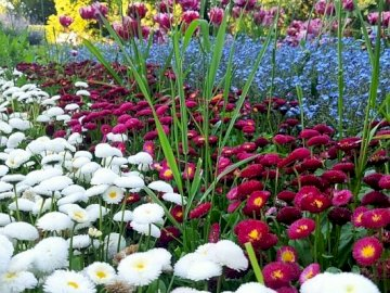 Primavera in tutto il suo splendore - Primavera in tutto il suo splendore, un parco inglese. Un vaso pieno di fiori viola.