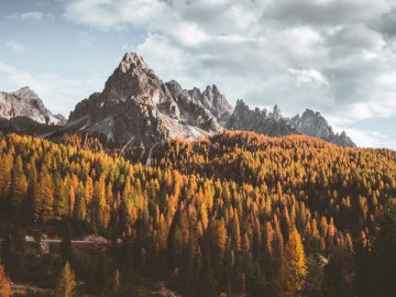 Changing seasons - Mountain ranges surrounded with trees. Switzerland. A tree with a mountain in the background.