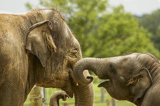 Family is the most important - Love, trust, safety. A elephant that is standing in the dirt.