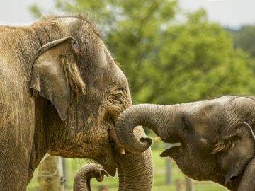 La famille est le plus important - Amour, confiance, sécurité. Un éléphant qui se tient dans la terre.