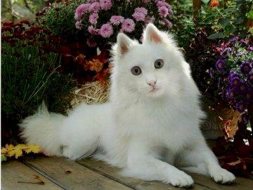 kotopies  wygląda jak kot - kotopies  wygląda jak kot. Kot siedzi na stole.