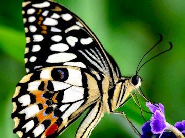 SCHMETTERLING - Finde das Bild des Schmetterlings. Eine Nahaufnahme einer Blume.