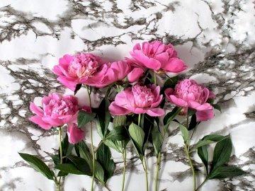 Pivoines roses sur fond de marbre - Fleurs inhabituelles - pivoines. Qui aime les pivoines?. Un vase rempli de fleurs roses.