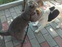 HUSDJUR - FUNKET MED DE Två SWEETSNA ÄR SÅ SVÄLSKT SÅ JAG HAR BESLUTAT ATT LÄGGA DET. En hund som står