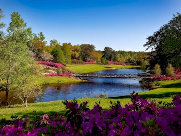 picturesque view - Bellingrath Gardens ---------. A flower in a body of water surrounded by trees.