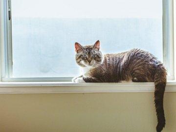 Milou, animaux - Chat gris sur fenêtre. New Jersey. Un chat assis à côté d'une fenêtre.