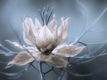 Blumen ............... - Blumen ............... Eine Nahaufnahme einer Blume.