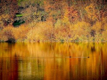 Autumn landscape - autumn colors ------------------------. A close up of a pond.