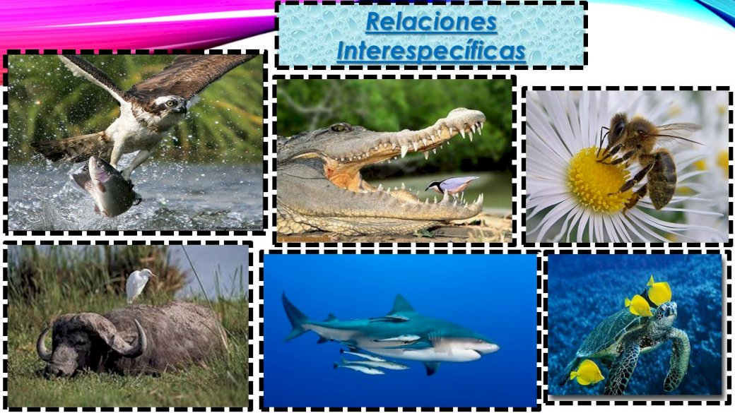 Interspecific Relations - Assemble the image and distinguish the different interspecific relationships (5×5)