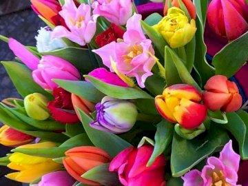 bukiet tulipanów - duży bukiet jasnych tulipanów. Zamknięty kwiat.