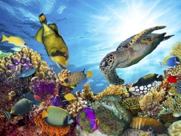 Unterwasserwelt - Die Welt im Ozean überrascht uns. Eine Gruppe bunter Blumen. Unterwassertiere. Eine Gruppe bunter B