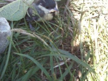 Biedny ptasek - Znaleźliśmy małego ptasia i zrobiliśmy mu gniazdo.