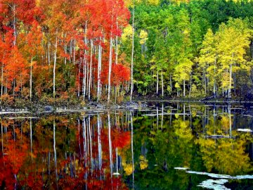 Autumn landscape - colorful leaves and reflections in the water. A body of water surrounded by trees.