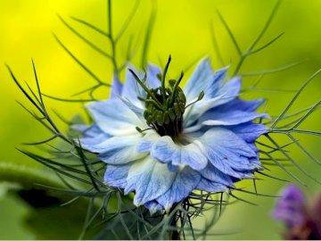 Flower...... - Flower............................ A close up of a flower.