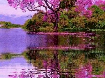 An amazing sight. - Puzzle: a flowering tree in pink. A close up of a pond.