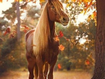 Little horse in autumn. - Jigsaw puzzle. Pets. Little horse in autumn. A close up of a horse.
